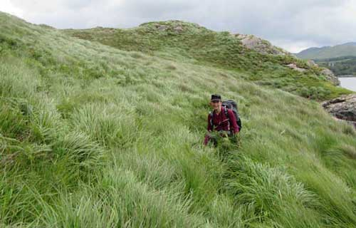 hiking in long grasses