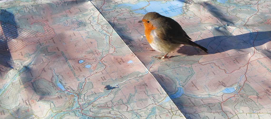 Robin sitting on a map